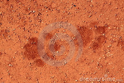 Trilhas do leão na areia