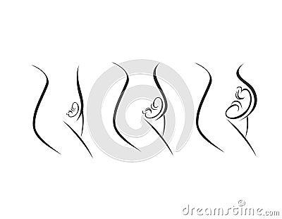 Trimestres del embarazo - etapas de desarrollo