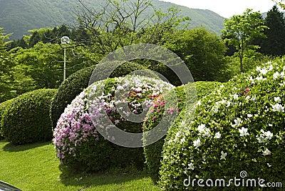 Trimmed bush