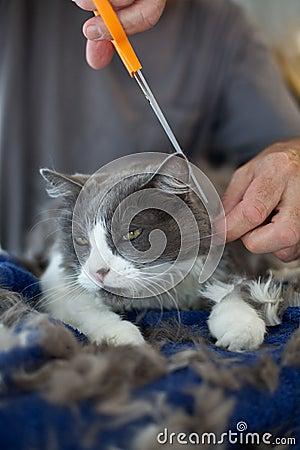 Trimming the Persian Feline