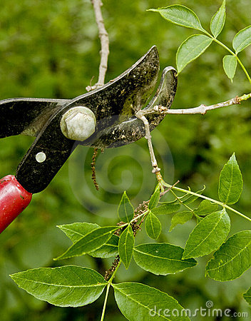 Trimming shrubs and branches