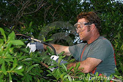 Trimming the Tree