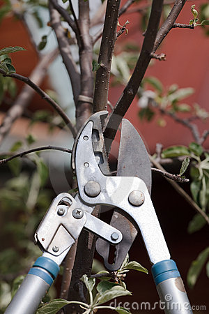 Trimming a tree bough