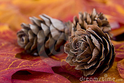 Trio of Pine cones