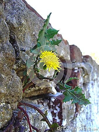 Triumph of the nature