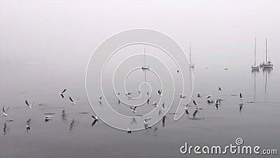 Troep van vogels die plotseling één voor één wegvliegen stock videobeelden