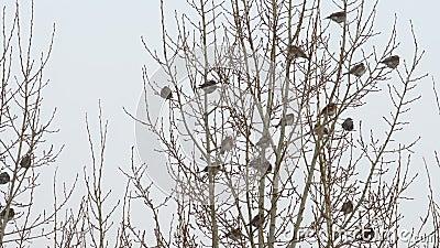 Troep van vogels op een boom stock videobeelden