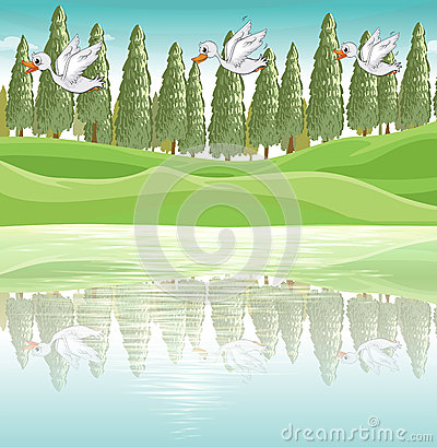 Trois canards volant le long de la rivière