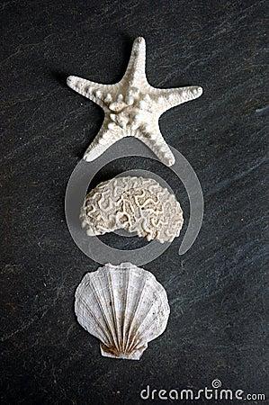 Trois formes de mer