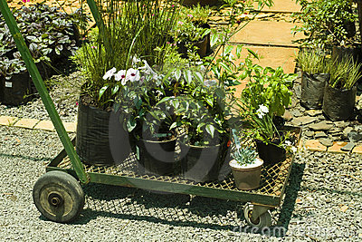 Trolley with plants