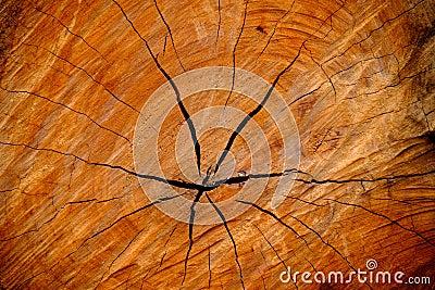 Tronc d 39 arbre en bois de coupe de texture photo stock image 50274237 - Tronc d arbre coupe ...