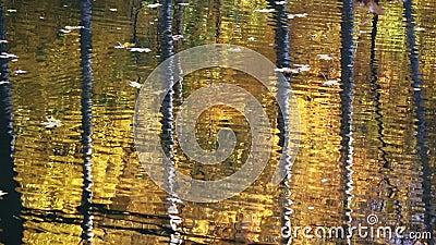 Tronchi di albero che riflettono in acqua stock footage