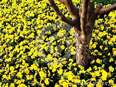 Tronco de árvore com flores amarelas