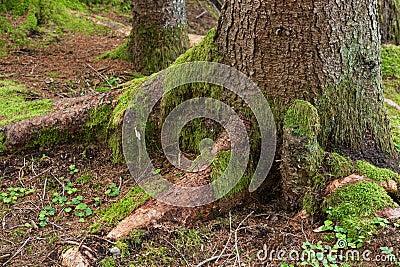 Tronco de árvore com musgo verde