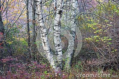 Troncos de árvore