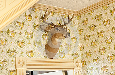 Trophée principal de cerfs communs sur le mur