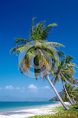 Free Tropic Royalty Free Stock Image - 1962306