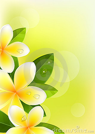 Tropic background with frangipani