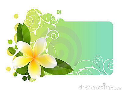Tropic banner with frangipani