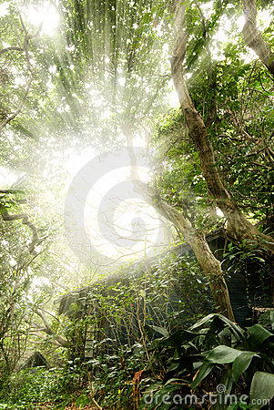 Free Tropic Forest Ruin Stock Image - 13164971