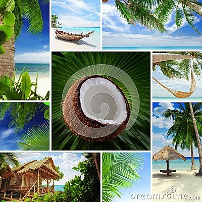 Free Tropic  Mix Stock Photo - 26051350