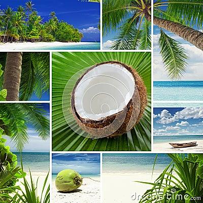 Free Tropic Mix Royalty Free Stock Photo - 26289355