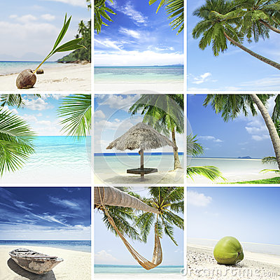 Free Tropic Mix Royalty Free Stock Images - 26289879