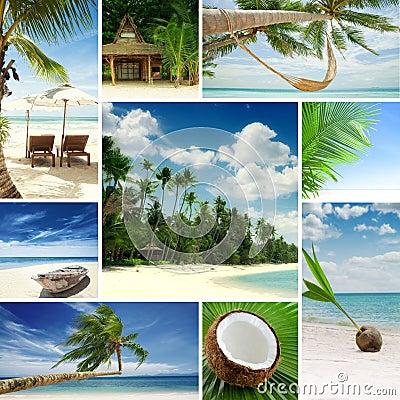 Free Tropic Mix Royalty Free Stock Photo - 29706715