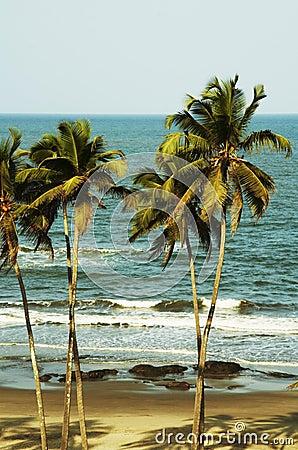 Free Tropical Beach Stock Photo - 2452820