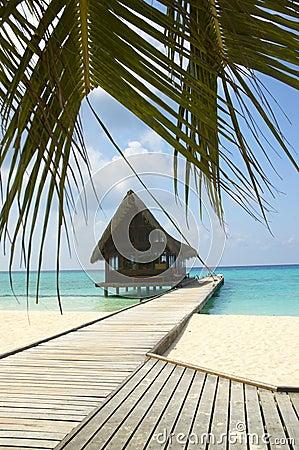 Free Tropical Beach Stock Photo - 4944550