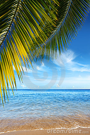 Free Tropical Beach Royalty Free Stock Photos - 5614278