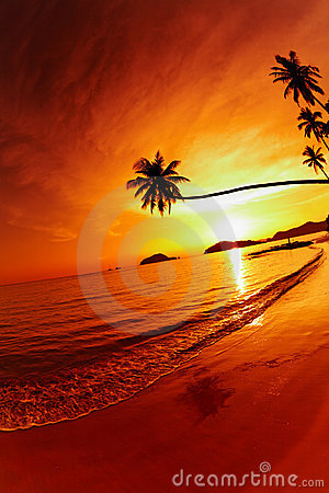 Free Tropical Beach At Sunset Royalty Free Stock Photography - 13138917