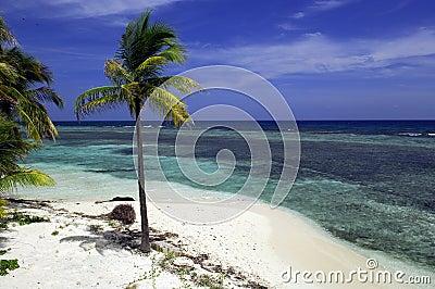 Tropical beach Belize
