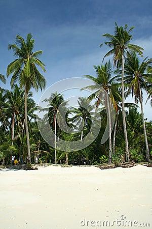tropical beach boracay palm trees philippines