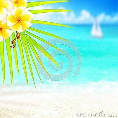 Free Tropical Beach Border Royalty Free Stock Photography - 24316497