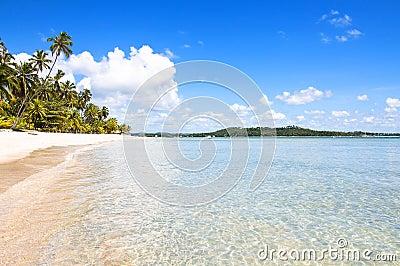 Tropical Beach in Brazil