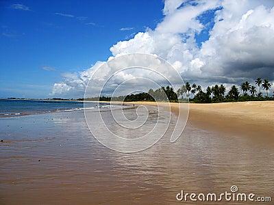 tropical beach brazil