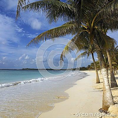 Tropical beach -  Cancun - Mexico