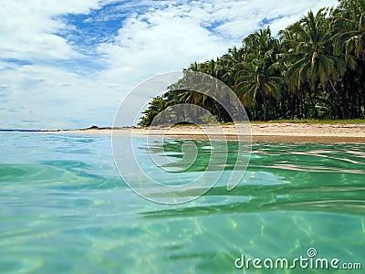 Tropical beach in caribbean