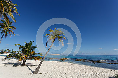 Tropical beach and coconut palm tree