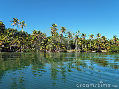 Tropical beach with coconut trees and calm water