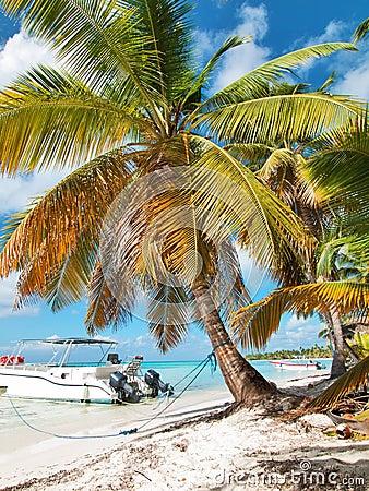 Tropical beach in Dominican republic. Caribbean sea. island Saon