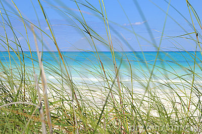 Tropical beach and grass