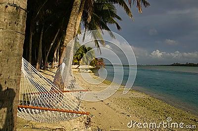 Tropical Beach Hammock under Palm Trees