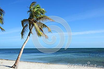 Tropical Beach, Key West