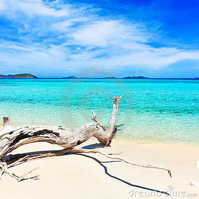 Free Tropical Beach Malcapuya Stock Photography - 19631432
