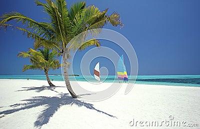 Tropical beach, Maldives