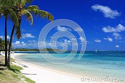Tropical beach in mauritius island