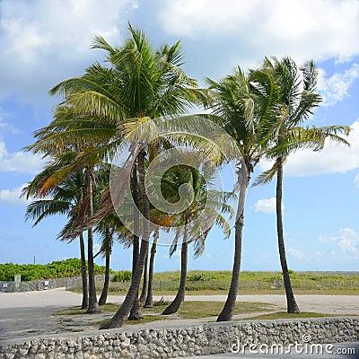 Tropical Beach, Miami Beach