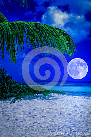 Tropical beach at night with a full moon
